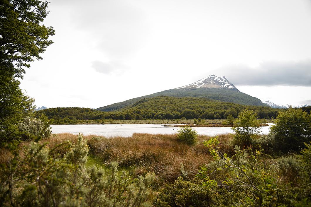 Parc National Terre de Feu à Ushuaia en Patagonie