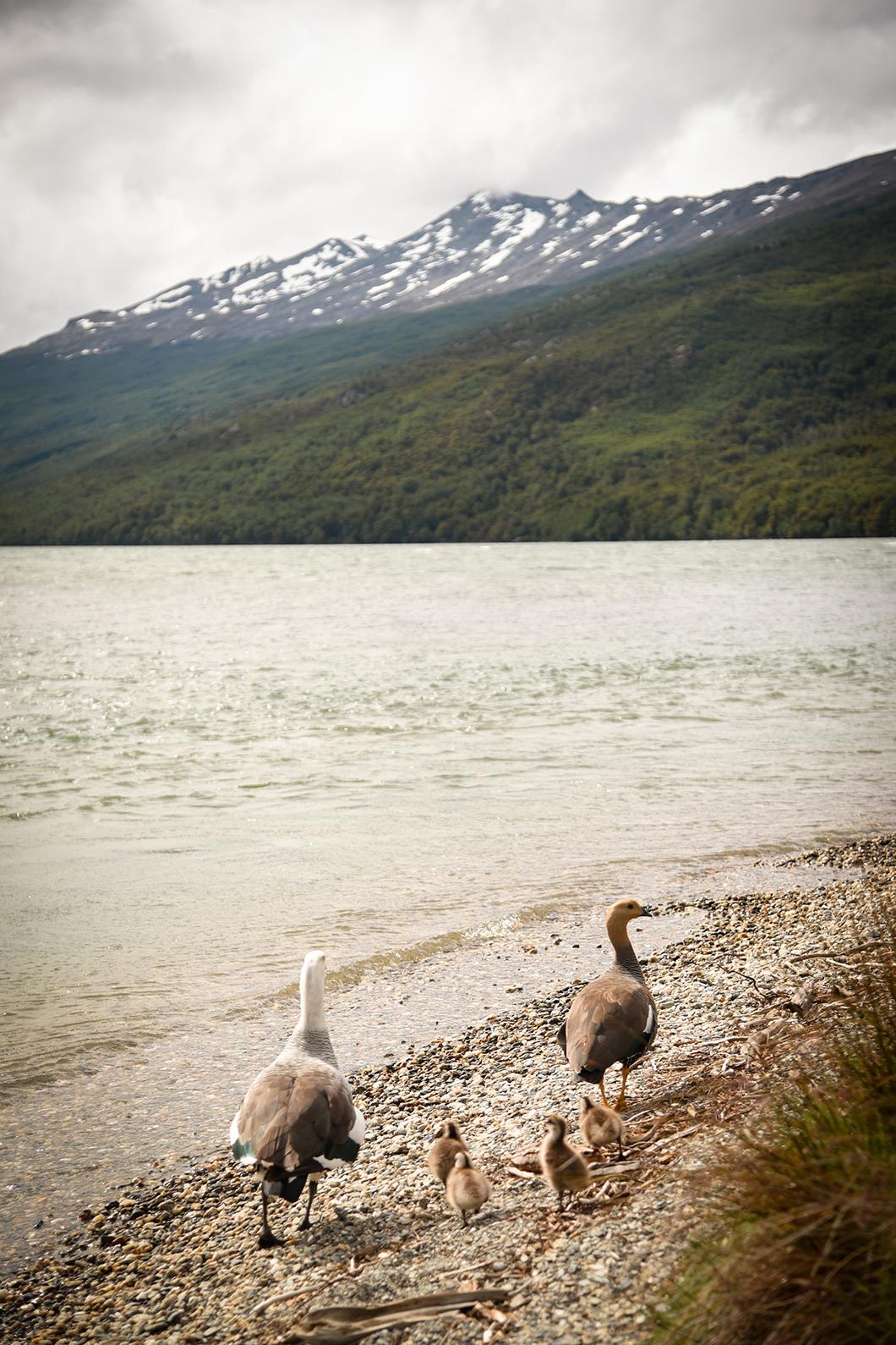 Parc National Terre de Feu en Patagonie