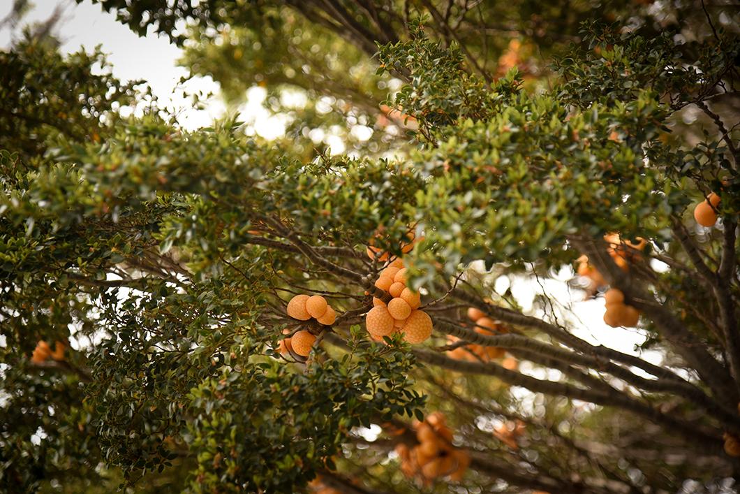 Que faire à Ushuaia ? Randonner dans le Parc National Terre de Feu