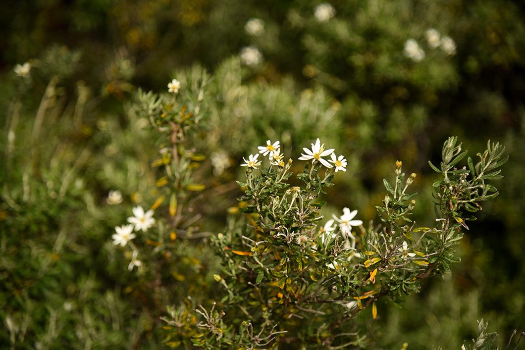 Découverte faune et flore en Patagonie