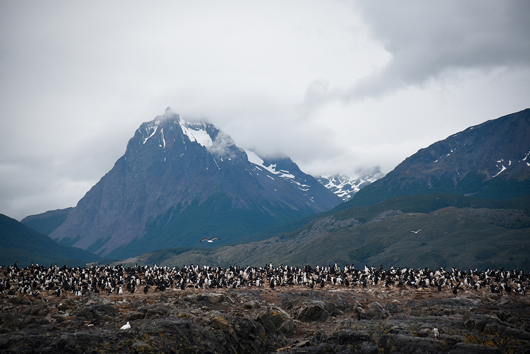 Canal de Beagle à Ushuaia en Patagonie