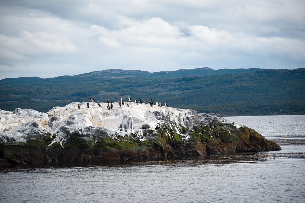 Les cormorans en Patagonie
