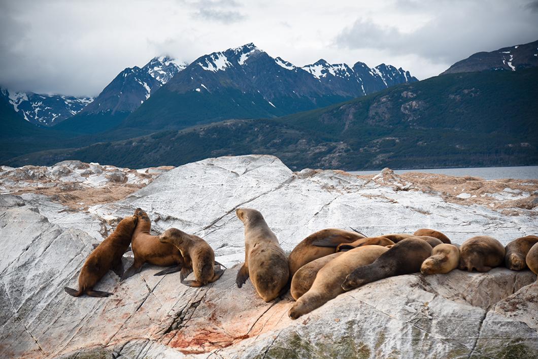 Balade en bateau pour rencontrer les phoques de Patagonie