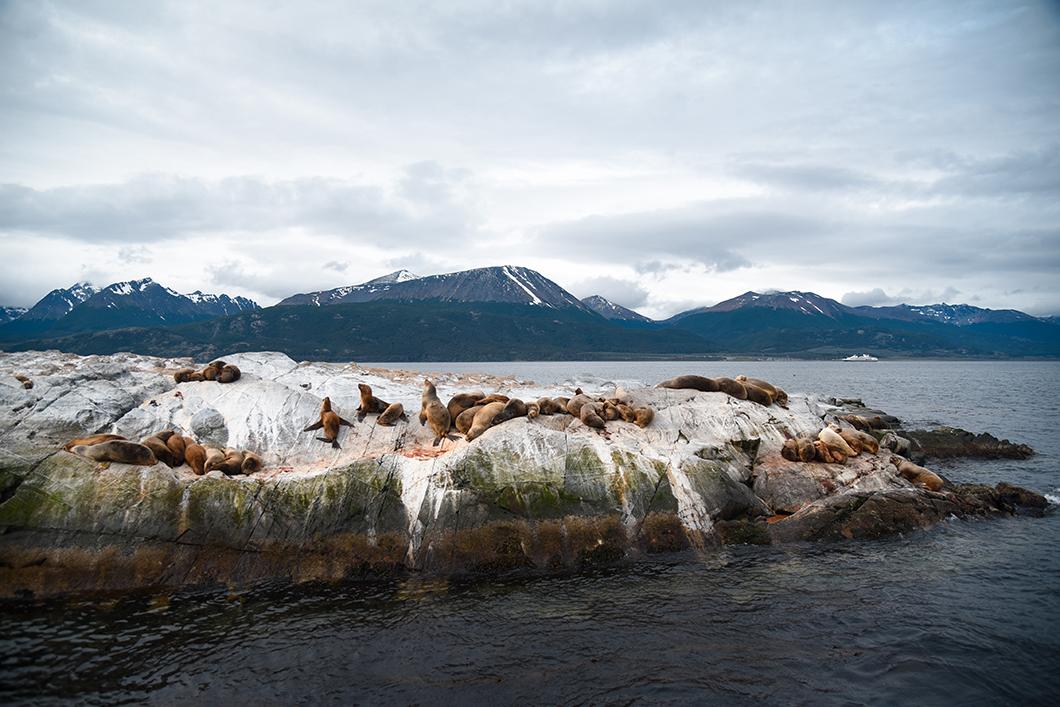 Partir à la rencontre des phoques d'Ushuaia