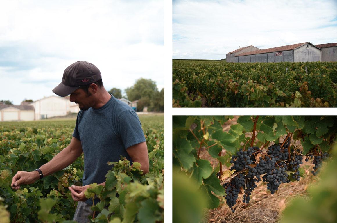 Visite du vignoble du Château De La Croix
