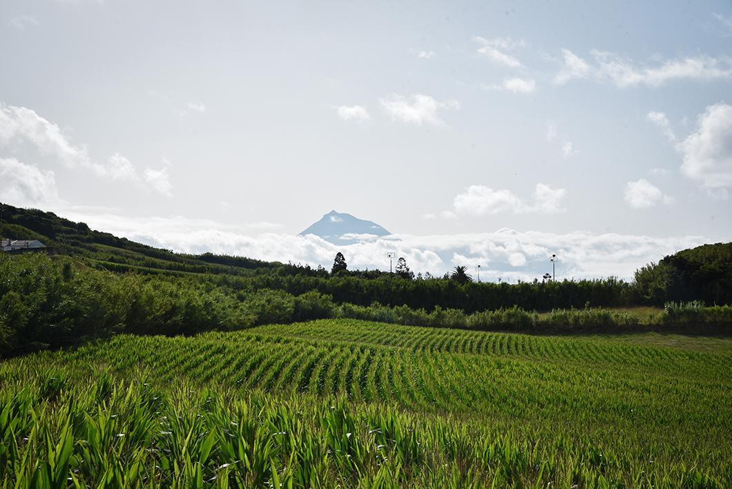 Voir le pico depuis Faial dans les Açores