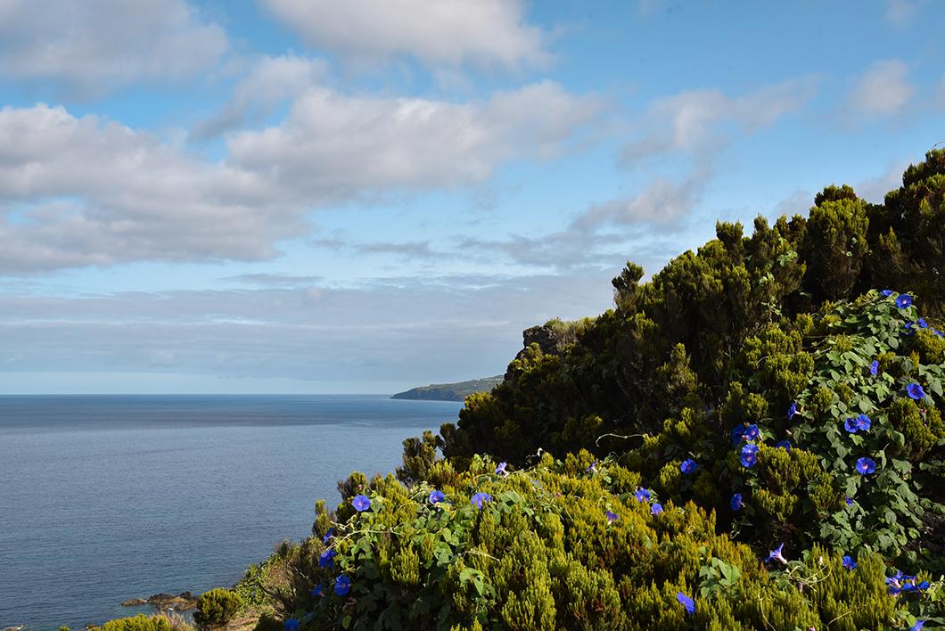 Point de vue au Morro de Castelo Branco sur l'île de Faial