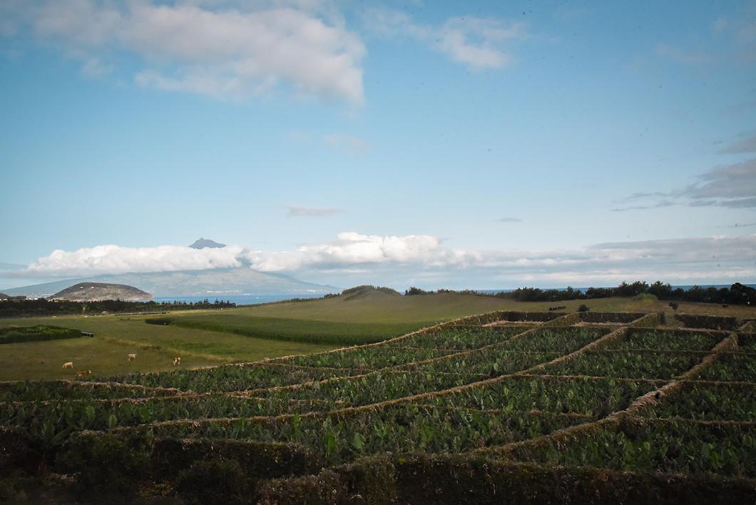 Roadtrip sur l'île de Faial dans les Açores au Portugal