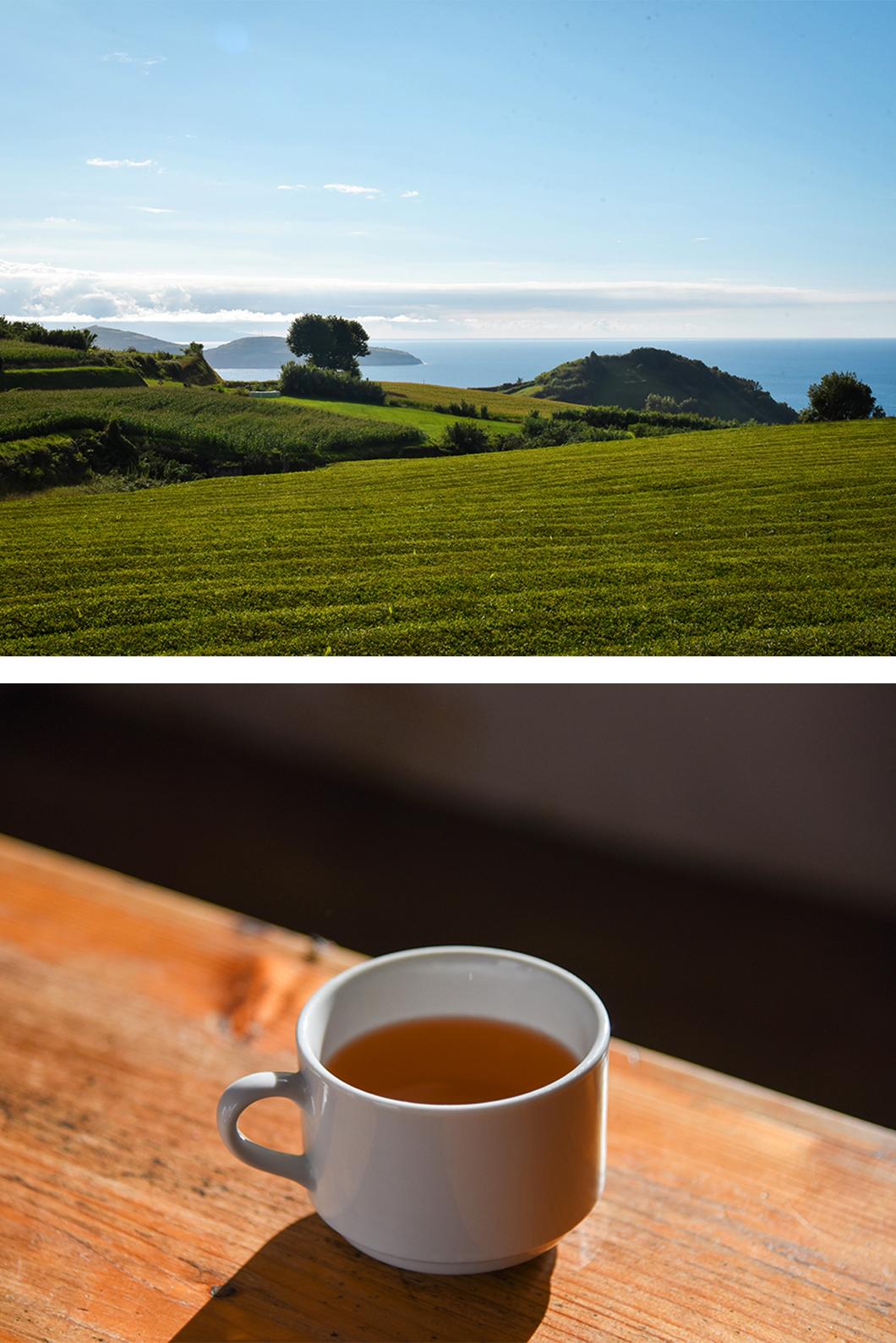 Dégustation gratuite de thé gratuité à la fabrique Gorreana
