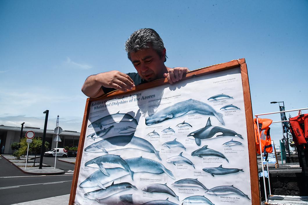 Aller observer les cétacés avec CW Azores