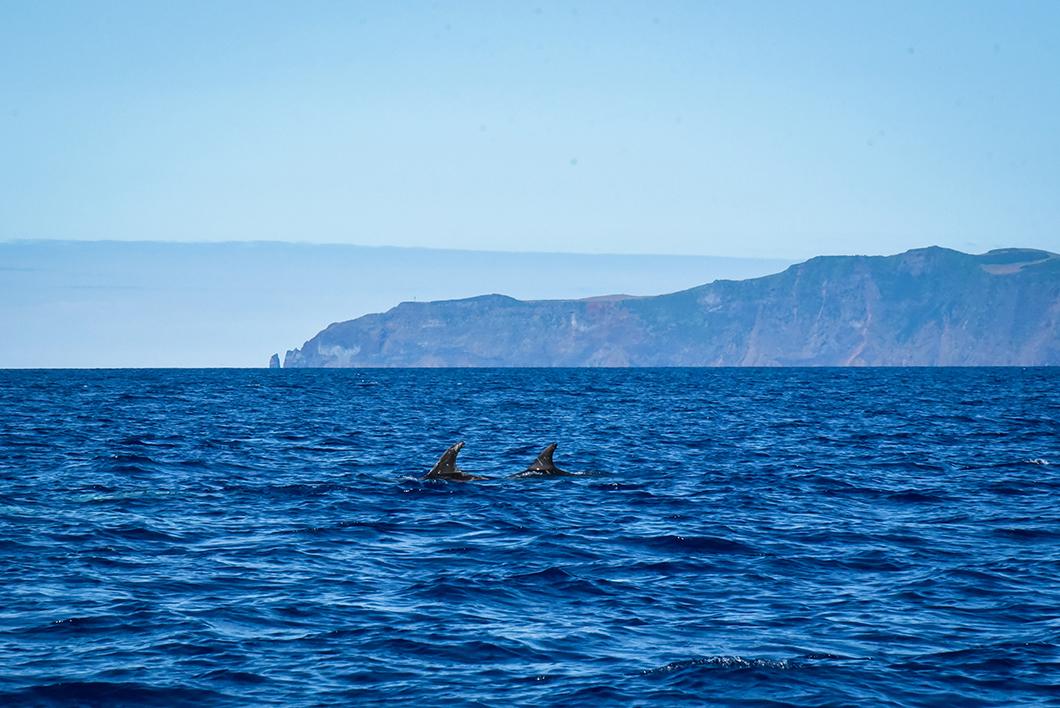 Voir des baleines sur l'île de Pico dans les Açores