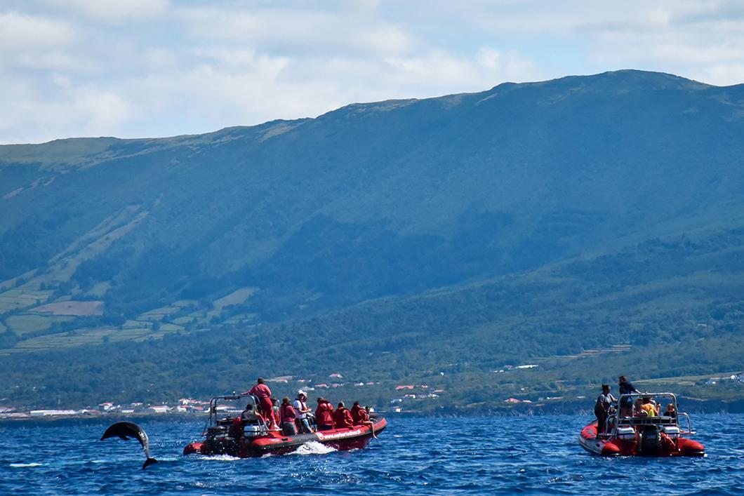 Faire du bateau pour voir les baleines à Madalena sur l'île de Pico dans les Açores