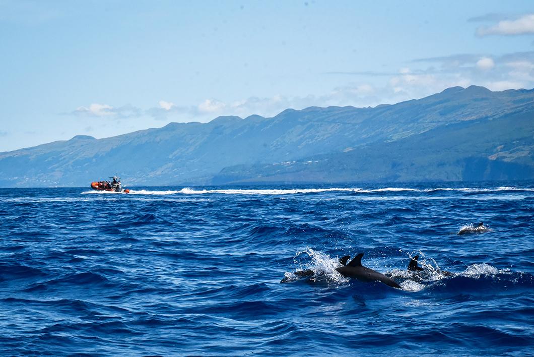 Admirer les cachalots des Açores en bateau à Madalena