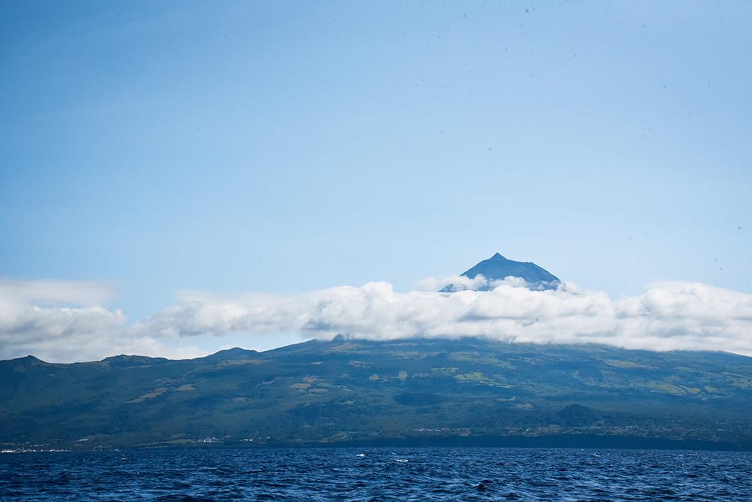 Que faire sur l'île de Pico ? Faire du bateau pour observer les baleines