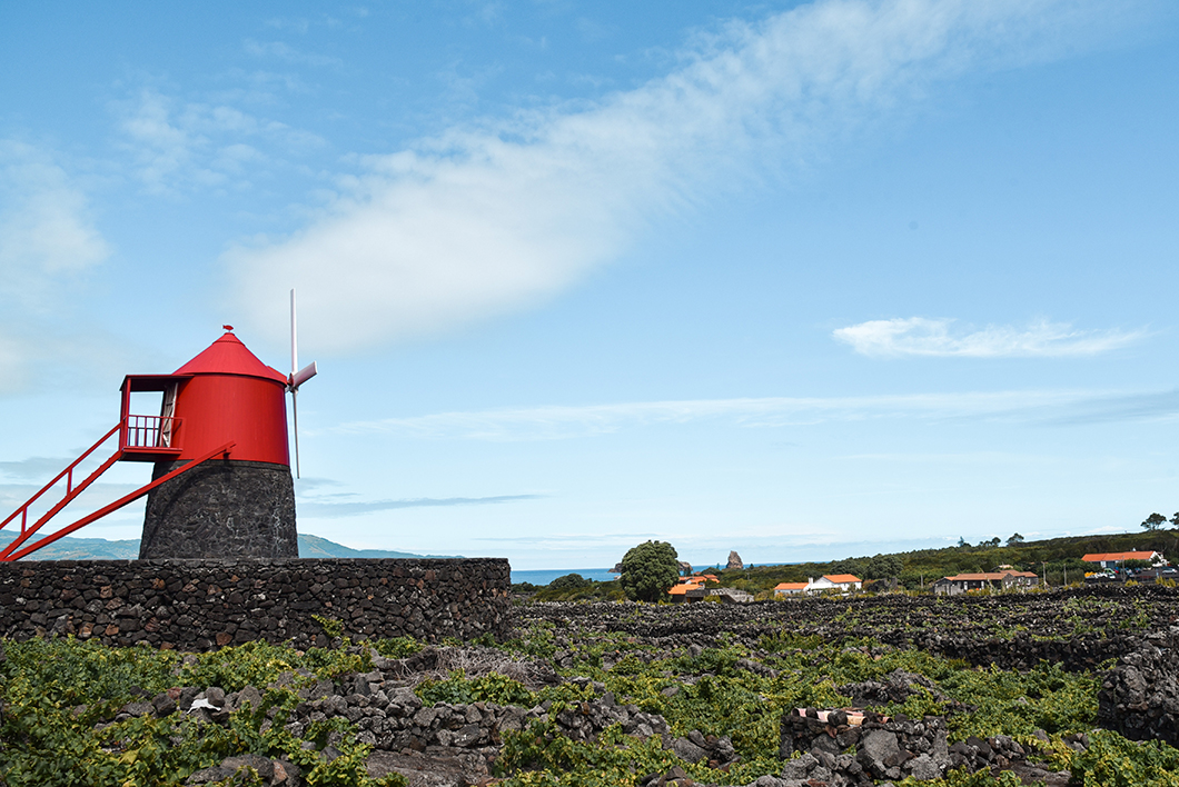 Visiter les vignes de Criacao Velha, activité à faire à Pico
