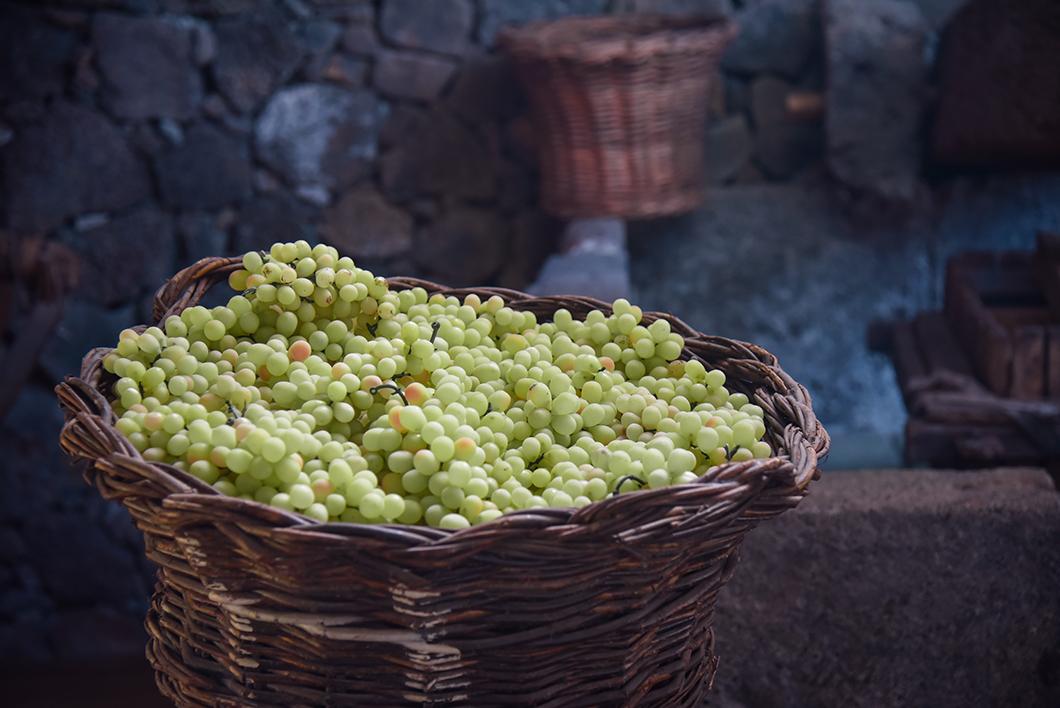 Découvrir les vignes de l'île de Pico dans les Açores