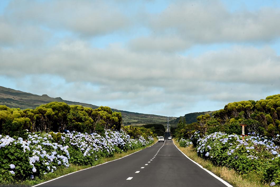 Roadtrip sur la longitudinal road sur l'île de Pico dans les Açores