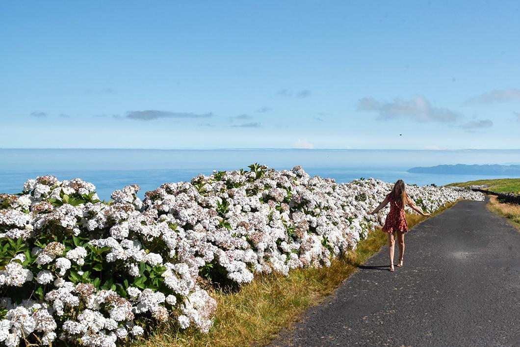 Points de vue au Mont Pico dans les Açores