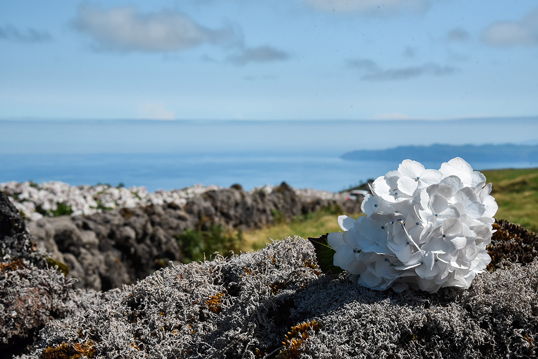 Randonnée au Mont Pico, randonnée d'une journée à Pico dans les Açores