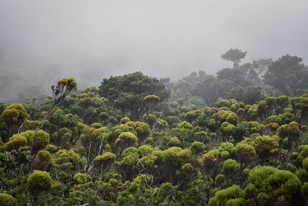 Monter au Mont Pico, le plus haut sommet du Portugal