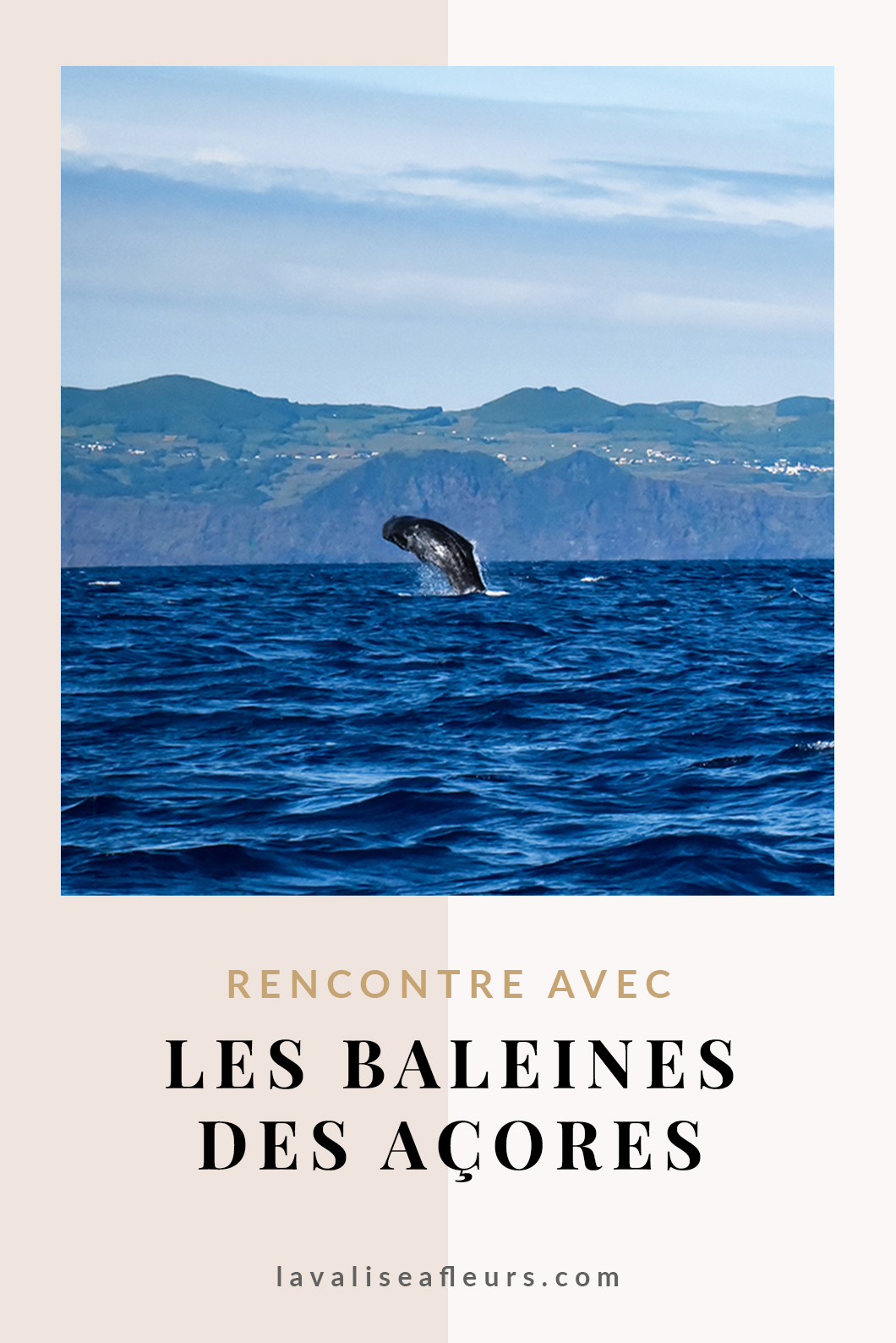 Rencontre avec les baleines dans les Açores