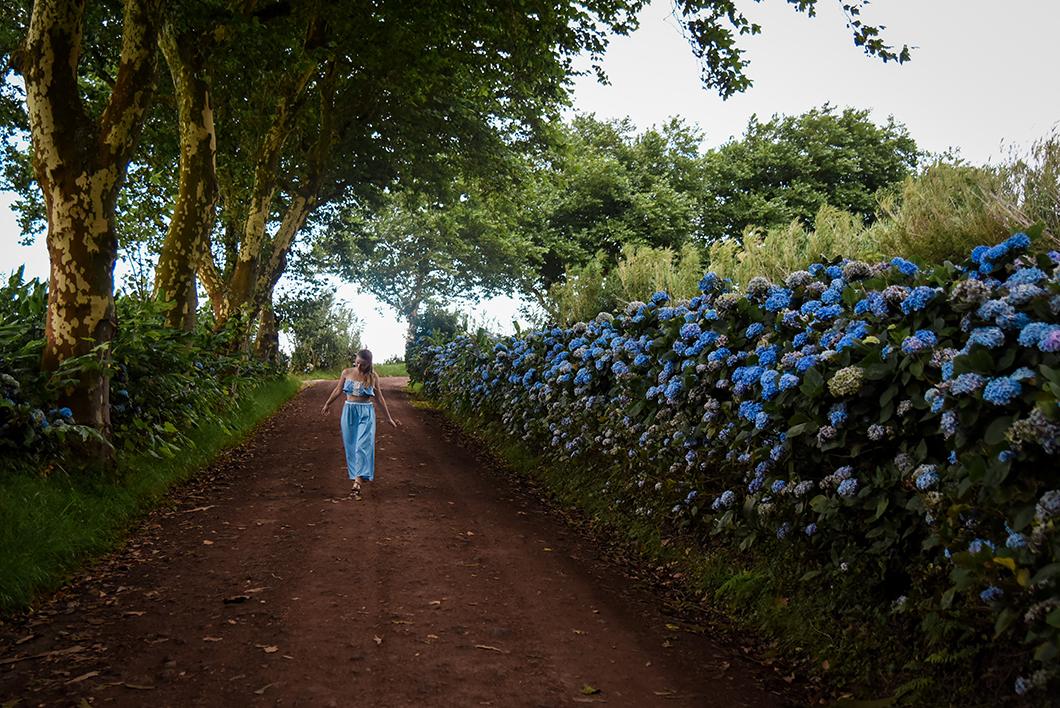 Prendre la jolie route des hortensias
