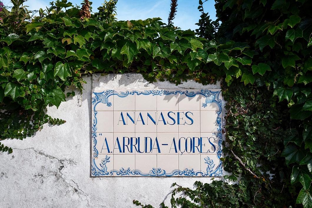 Visite des plantation de Ananases A Arruda dans les Açores
