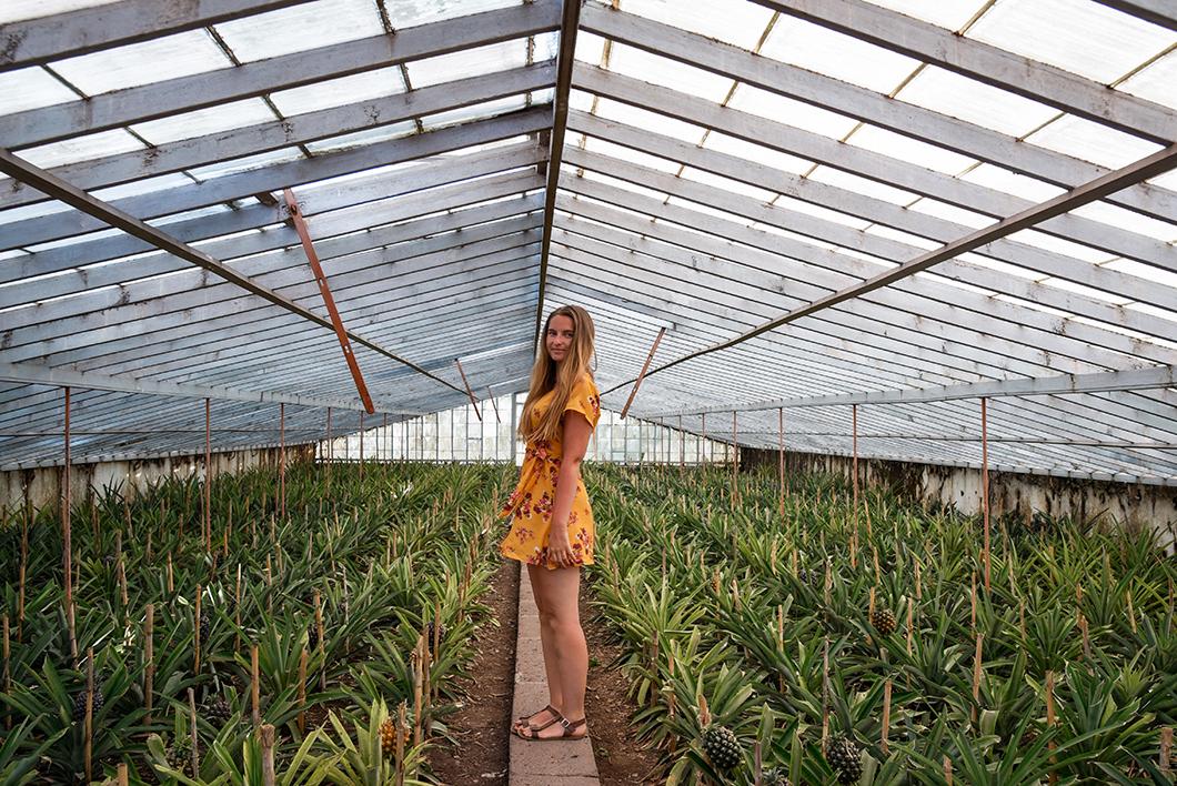 Ananases A Arruda, activité à faire à Ponta Delgada sur l'île de Sao Miguel