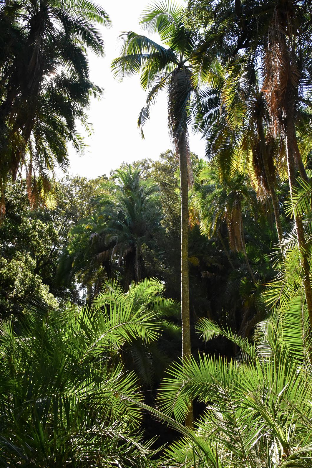 Balade dans les Jardim António Borges à Ponta Delgada