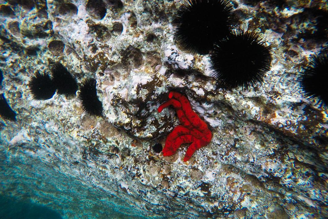 Voir les étoiles de mer de Vila Franca do Campo dans les Açores
