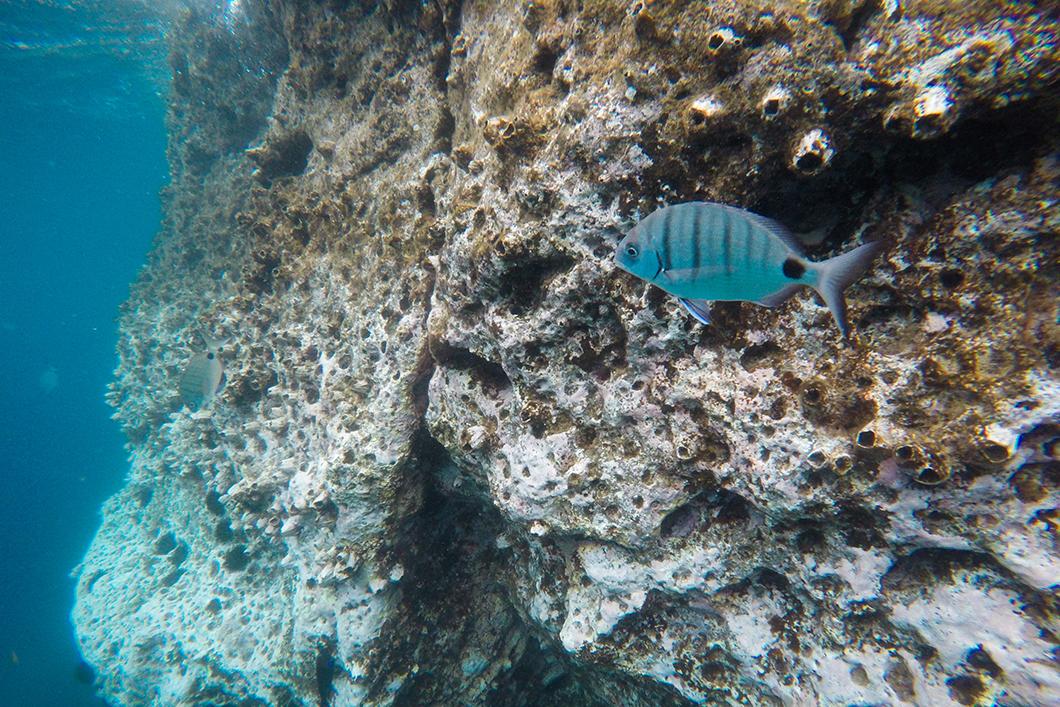 Observer les poissons sur l'île de Sao Miguel