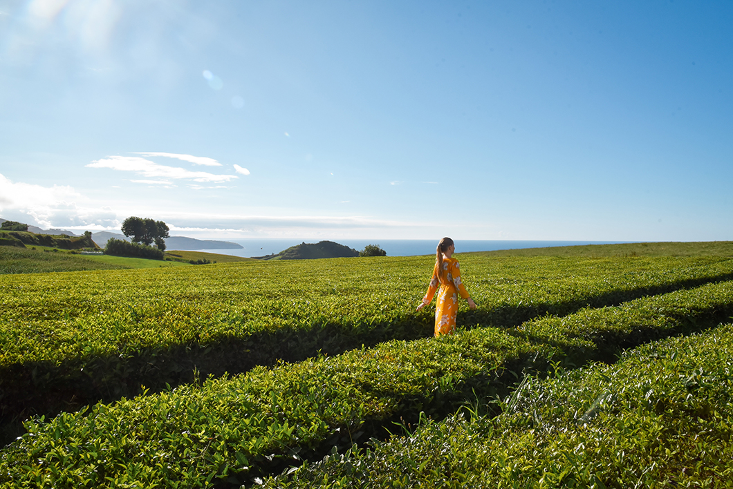 Balade dans les grands champs de thé de la fabrique Gorreana