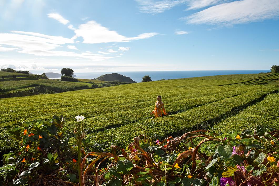 Activité à Sao Miguel dans les Açores, découvrir la fabrique de thé Gorreana