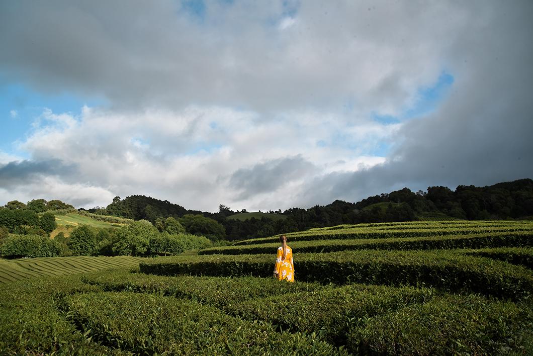 Se promener dans les champs de thé de la fabrique de Gorreana à Sao Miguel