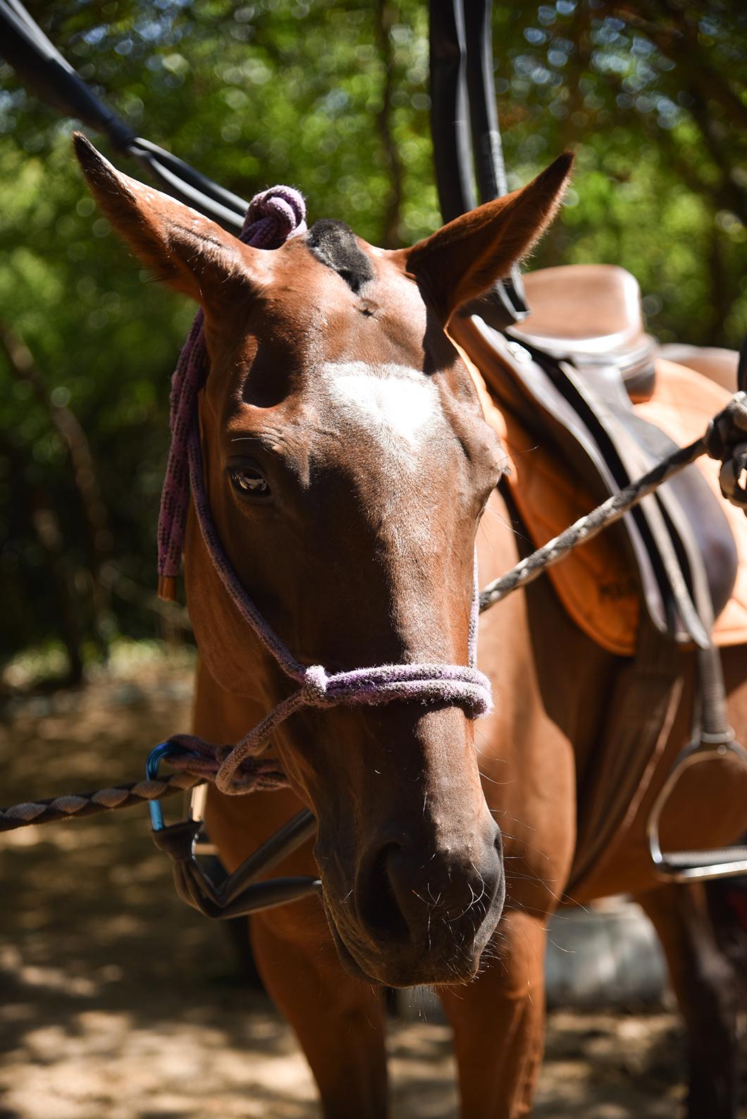 Faire du cheval dans la Forêt de Chantilly