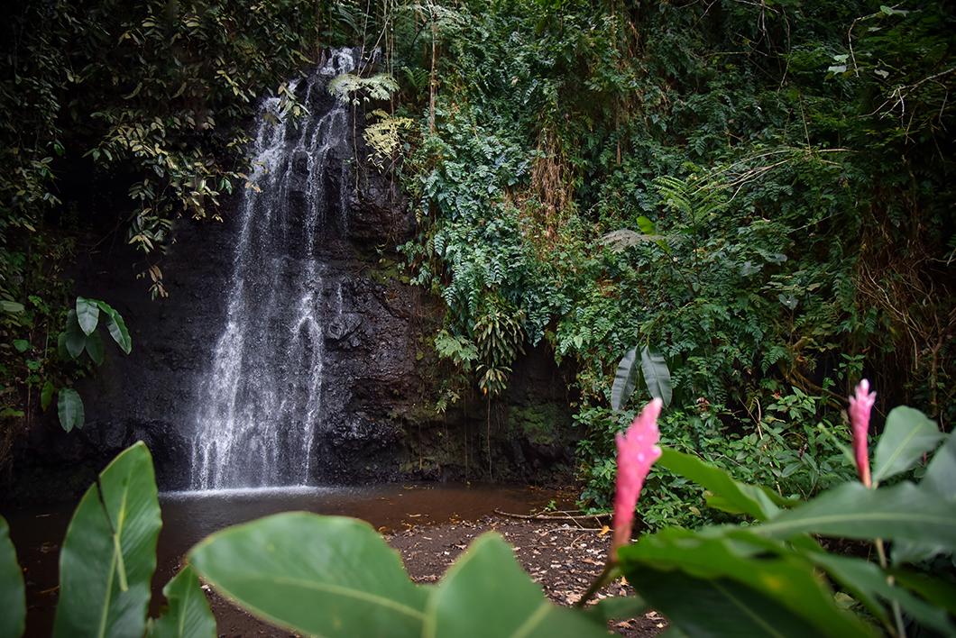 Visiter le Jardin d'eau de Vaipahi