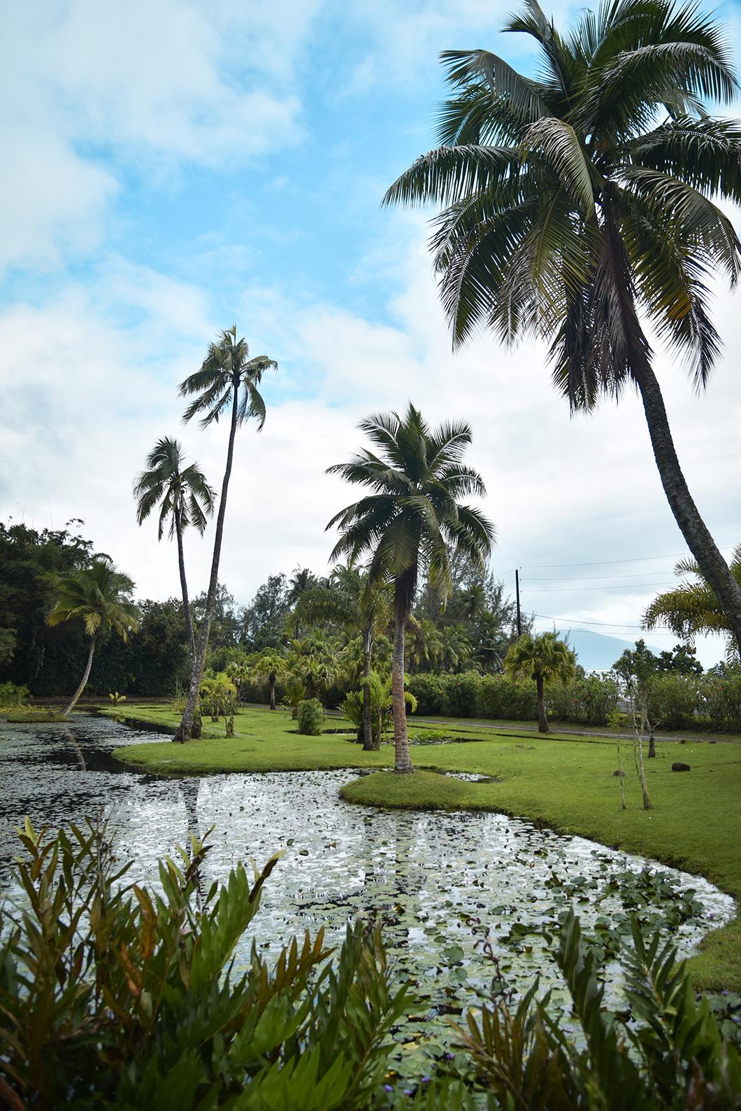 Que faire à Tahiti ? Visite du Jardin d'eau de Vaipahi