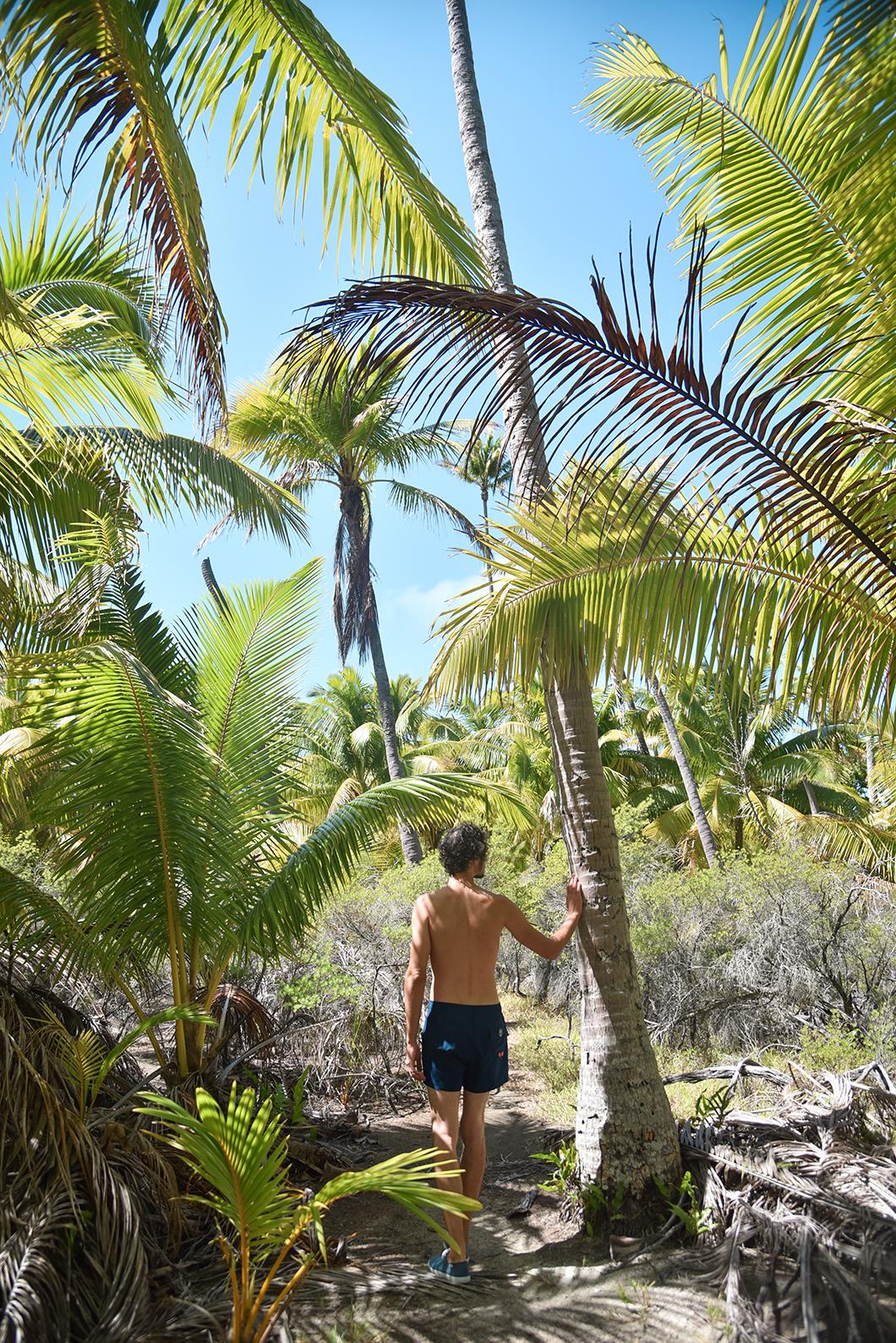 Les palmiers de Tetiaroa