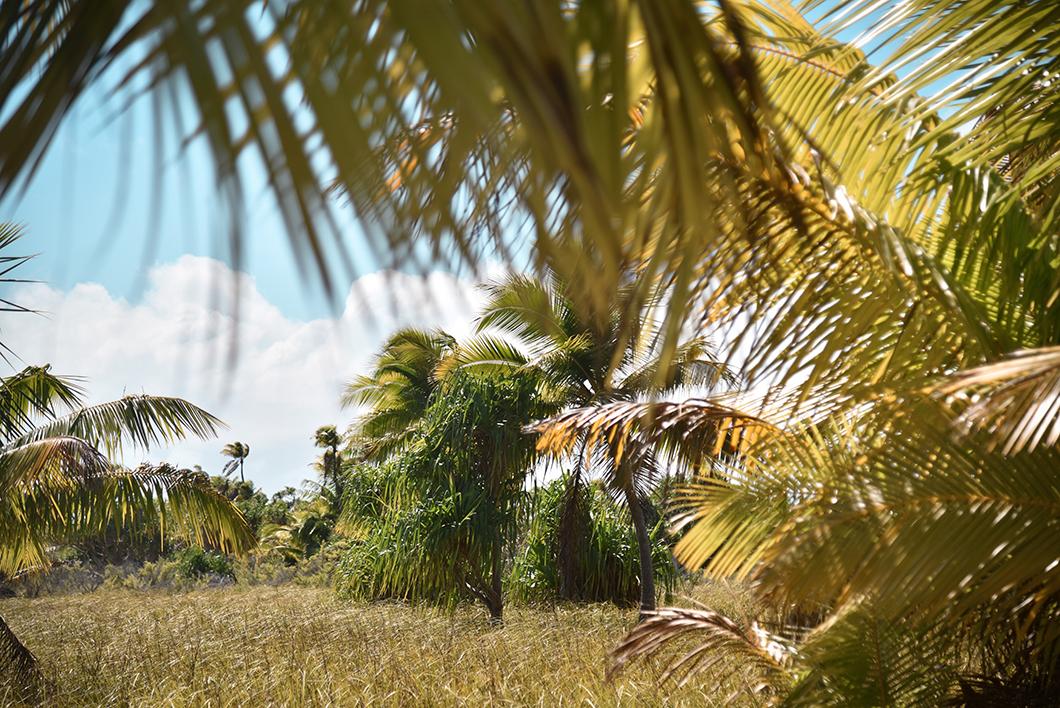 Découvrir l'île de Tetiaroa en Polynésie Française