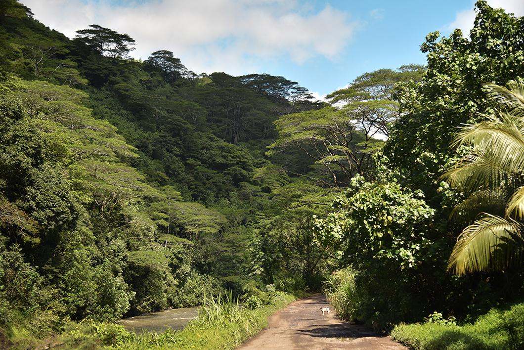 Que faire à Tahiti ? Visite de la Vallée de Papenoo