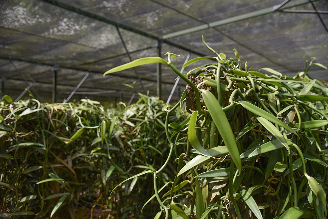 Le Tropical Garden, bonne adresse à Moorea