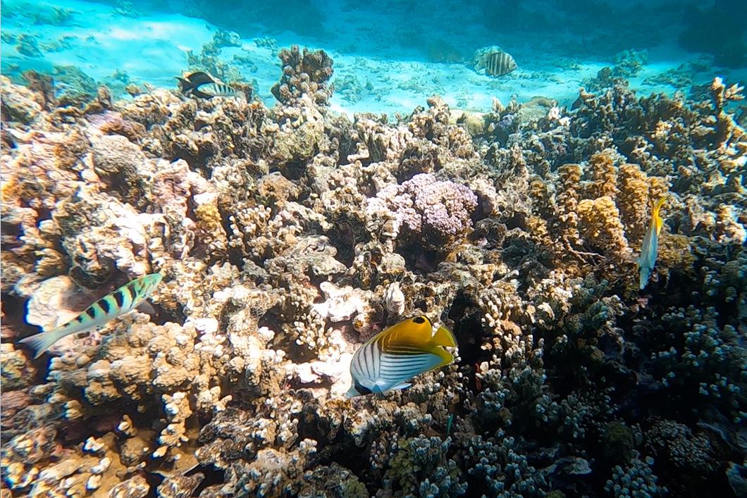 Observer les poissons à la plage de Temae