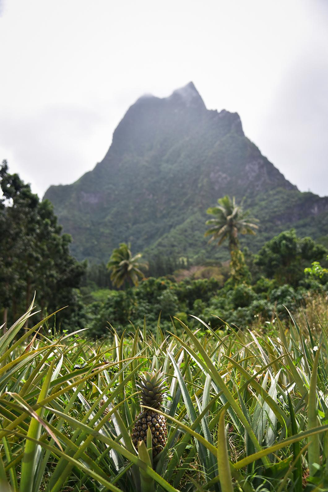 La route du col des ananas à Moorea