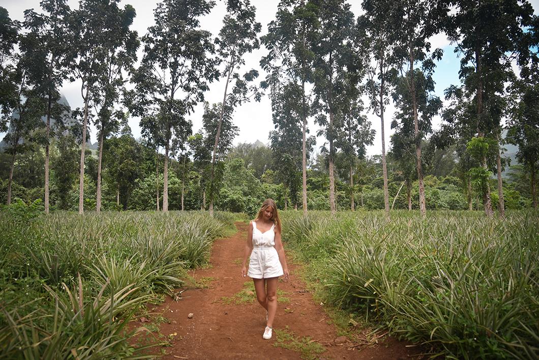 Voir les champs d'ananas à Moorea en Polynésie Française
