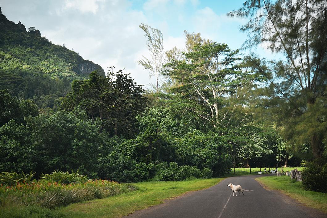 Visite des terres de l'île de Moorea