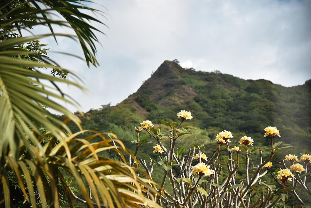 Que faire en Polynésie Française ? Visiter l'île de Moorea