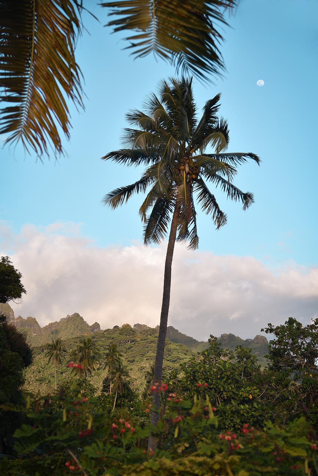 Faire le tour de l'île de Moorea en voiture