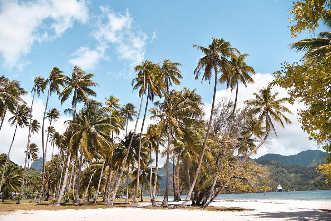 La plage de Ta'ahiamanu et ses nombreux palmiers à Moorea