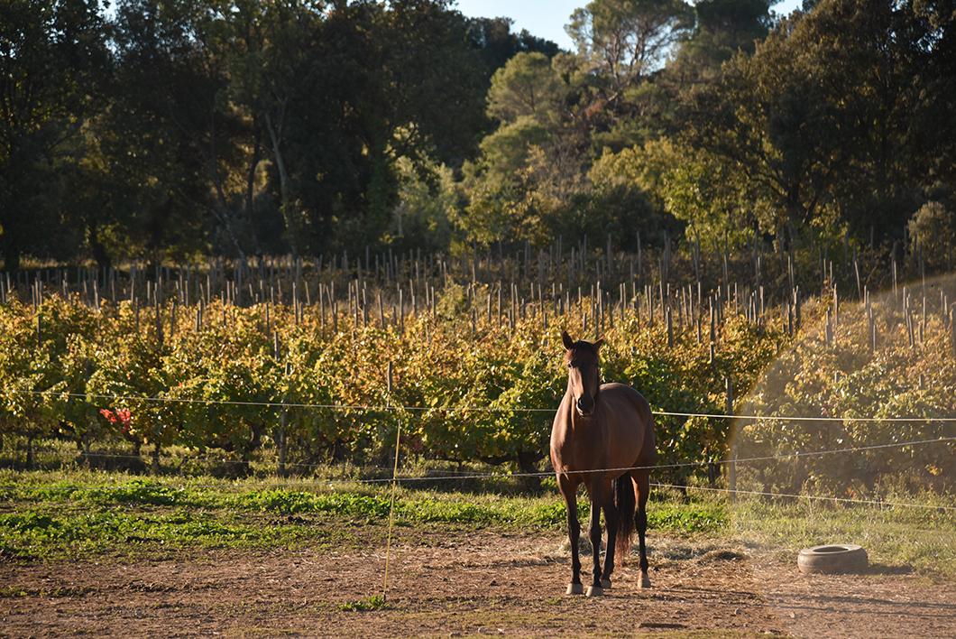 Randonnée en Provence Occitane au Domaine de Gressac