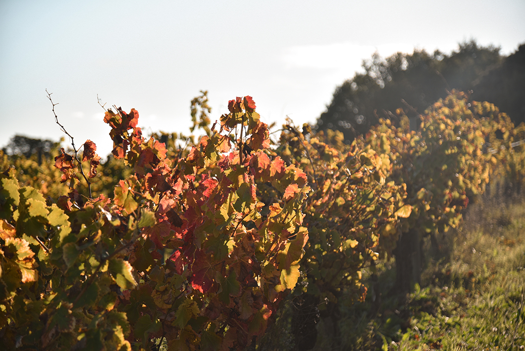 Les jolis vignobles de la Provence Occitane
